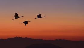 Ptaki Lata Nad górą Zdjęcie Royalty Free