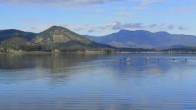 Ptaki lata nad jeziornym moogerah zbiory wideo