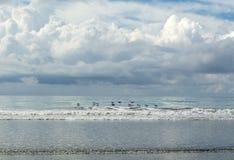 Ptaki lata nad ocean powierzchnią - Costa Rica Obrazy Stock