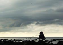 Ptaki lata nad ocean powierzchnią - Costa Rica Obraz Royalty Free