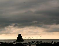 Ptaki lata nad ocean powierzchnią - Costa Rica Fotografia Stock
