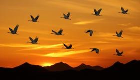 Ptaki Lata przy zmierzchu Panoramicznym widokiem Obraz Royalty Free