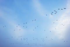Ptaki lata w błękitnym mgłowym niebie Obrazy Royalty Free