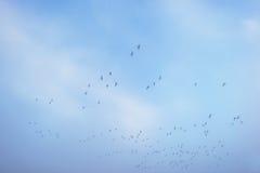 Ptaki lata w błękitnym mgłowym niebie Fotografia Stock