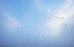 Ptaki lata w błękitnym mgłowym niebie Obraz Stock