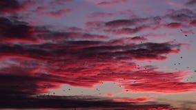 Ptaki Migrujący Lata Przy Tajemniczym Czerwonym zmierzchem zbiory