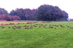 Ptaki na łąkach Obrazy Royalty Free