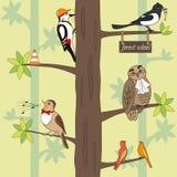 Ptaki na drzewie Zdjęcie Royalty Free