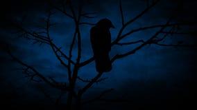 Ptaki Na gałąź Daleko I lataniu Przy nocą zdjęcie wideo