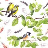Ptaki na gałąź deseniowy target668_0_ bezszwowy akwarela Fotografia Royalty Free