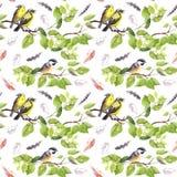 Ptaki na gałąź, piórka deseniowy target668_0_ bezszwowy akwarela Obraz Stock