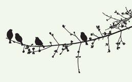 Ptaki na gałąź w wiosna czasie ilustracji