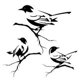 Ptaki na gałąź wektoru czarnym secie Fotografia Royalty Free