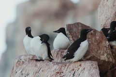 Ptaki na halnej naturze fotografia royalty free