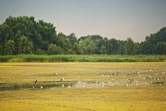 Ptaki na jeziorze Zdjęcia Royalty Free