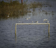 Ptaki na jeziorze Fotografia Stock