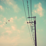Ptaki na linii energetycznej depeszują przeciw niebieskiemu niebu z chmury backgroun Fotografia Royalty Free