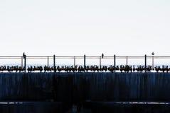 Ptaki na molu Zdjęcie Royalty Free