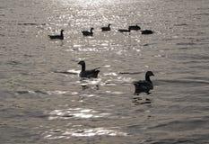 Ptaki na morzu Zdjęcie Royalty Free