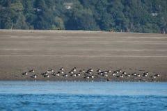 Ptaki na plaży Zdjęcia Royalty Free