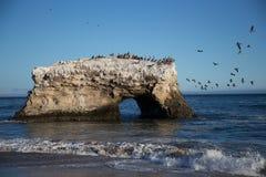 Ptaki na skale Zdjęcia Stock