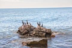 Ptaki na skale Obrazy Royalty Free