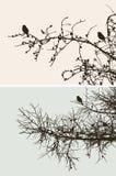 Ptaki na sosnowych gałąź Obrazy Stock