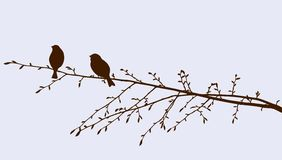 Ptaki na sprig royalty ilustracja