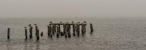 Ptaki na starym molu w mgle Zdjęcie Stock