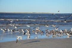 Ptaki na wodzie obraz royalty free