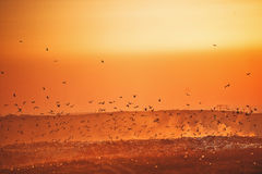 Ptaki nad śmieciarskim wysypiskiem przy zmierzchem Obraz Stock