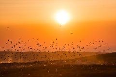 Ptaki nad śmieciarskim wysypiskiem przy zmierzchem Zdjęcie Stock