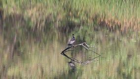 ptaki Nadbrzeże rzeki regionalności park, Sonoma wina kraj, Kalifornia zdjęcie wideo