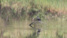 ptaki Nadbrzeże rzeki regionalności park, Sonoma wina kraj, Kalifornia zbiory