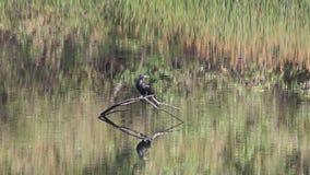 ptaki Nadbrzeże rzeki regionalności park, Sonoma wina kraj, Kalifornia zbiory wideo