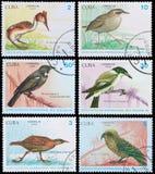 Ptaki Nowa Zelandia Obrazy Royalty Free