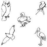 ptaki Ołówkowy nakreślenie ręką Obraz Stock