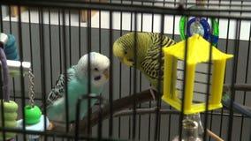 Ptaki obok each inny w klatce zbiory