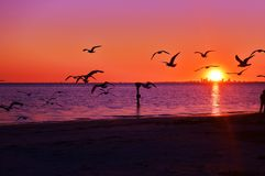 Ptaki, ocean, zmierzch, piasek to są życiem! Zdjęcie Royalty Free