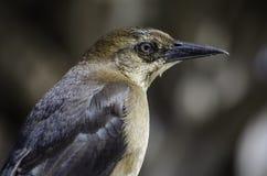 Ptaki od mirt plaży zdjęcie stock