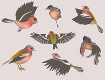 ptaki odłogowania Obrazy Stock