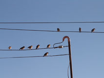 ptaki odizolowane biały przewód Obrazy Stock