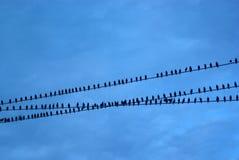 ptaki odizolowane biały przewód Zdjęcie Royalty Free