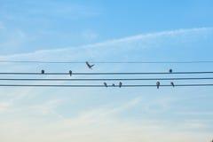 ptaki odizolowane biały przewód Obraz Royalty Free