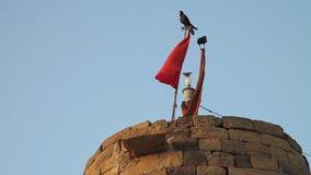 Ptaki odpoczywa na flagach zdjęcie wideo