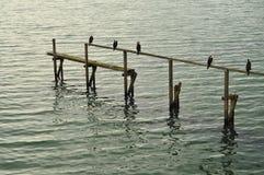 Ptaki odpoczywa na resztkach stary jetty poręcz Zdjęcia Stock