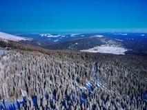 Ptaki one przyglądają się, widok z lotu ptaka zakrywający z śniegiem las obrazy royalty free
