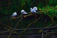 Ptaki piórko gromadzący się wpólnie obraz stock