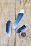 Ptaki piórko Zdjęcie Stock