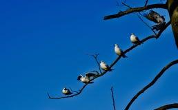 Ptaki piórko gromadzący się wpólnie obrazy stock